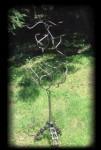 Hat Tree- 1993